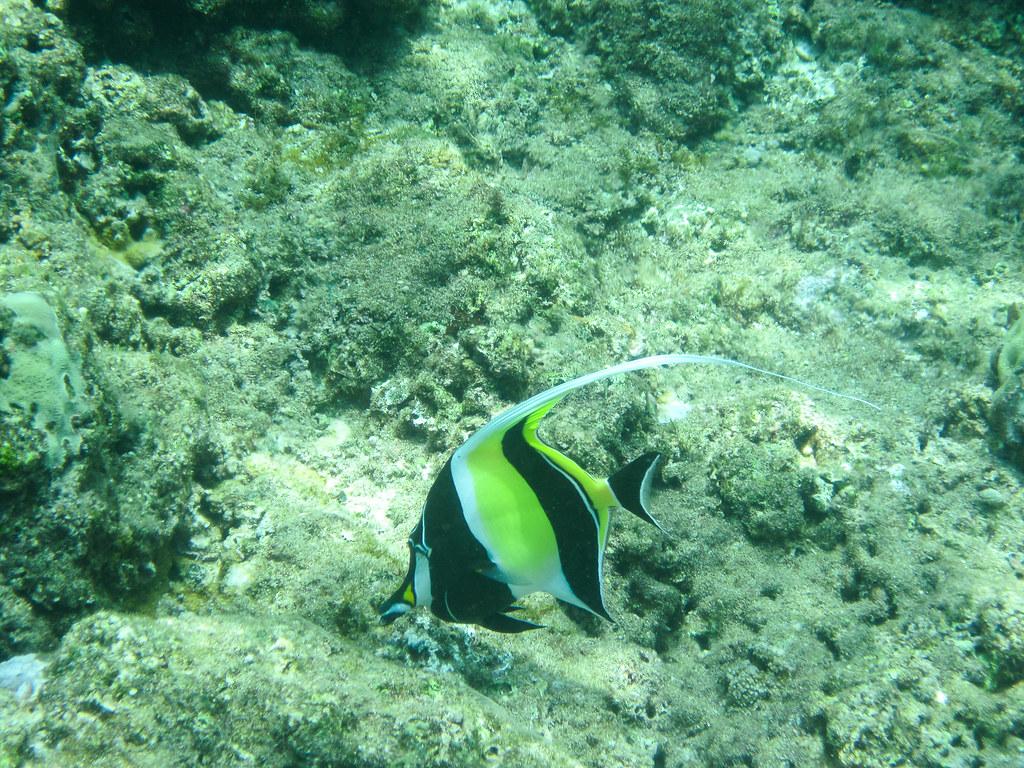 Maui Fish