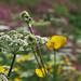 Burgundy: Spring flowers in spring