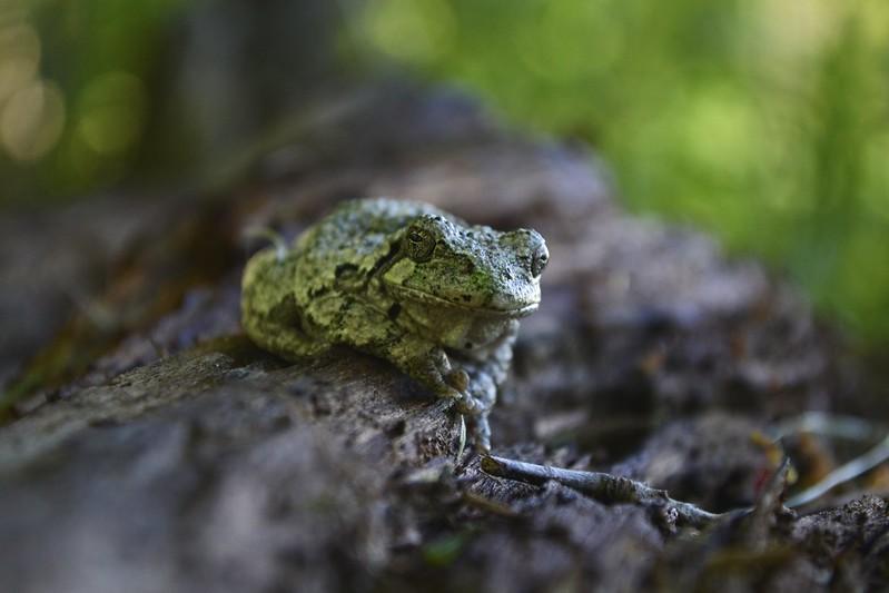 Mr. tree frog