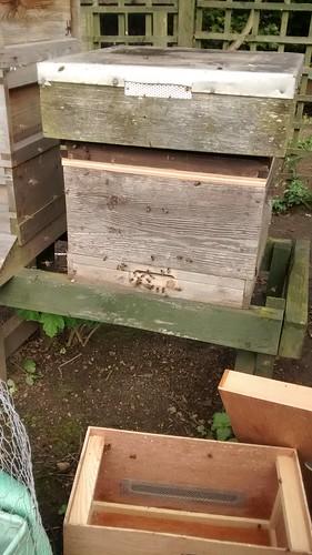 hive June 14
