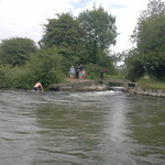 adults and children swimming and jumping in from bridge at Compton Lock