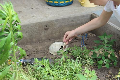 Working Garden 1