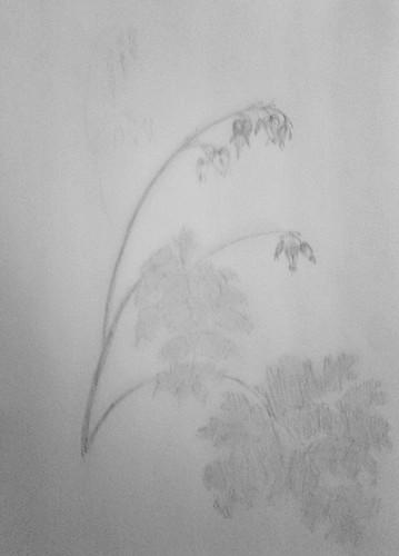Sketch of Bleeding Heart in nature journal