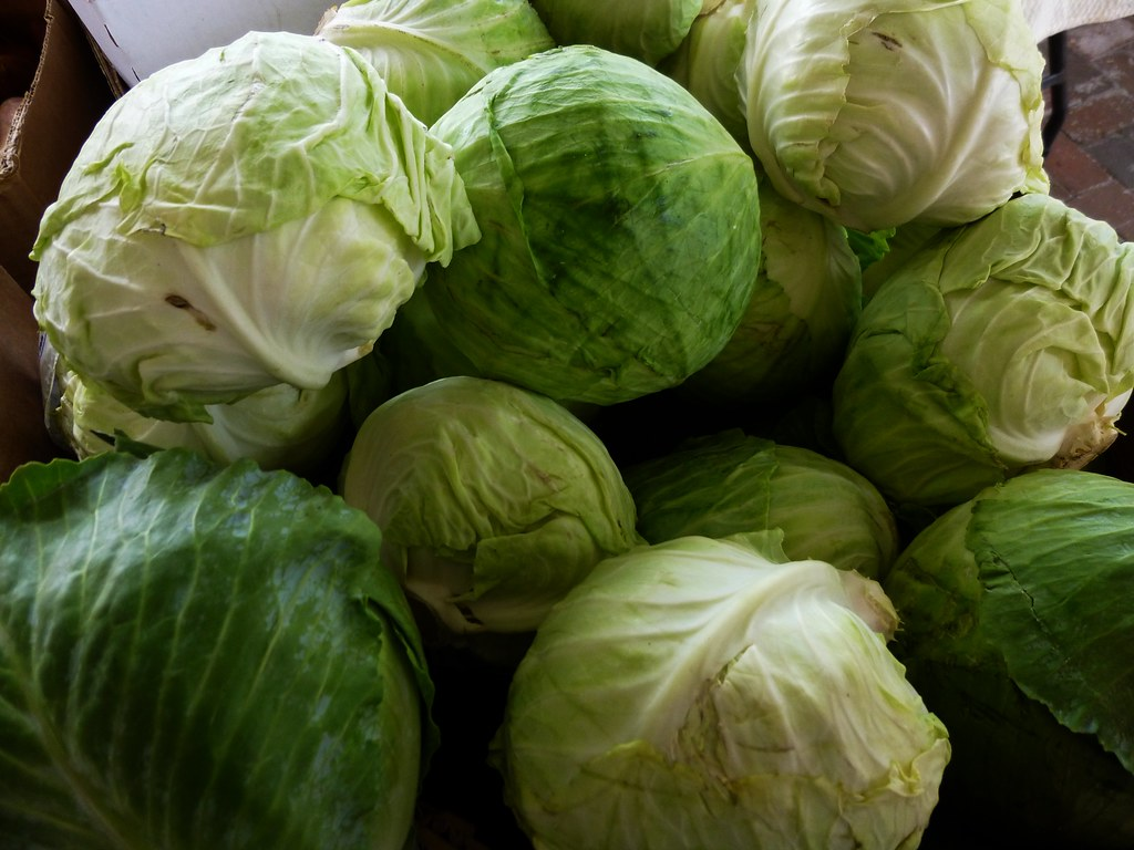 cabbage cooked, boiled, drained, without salt