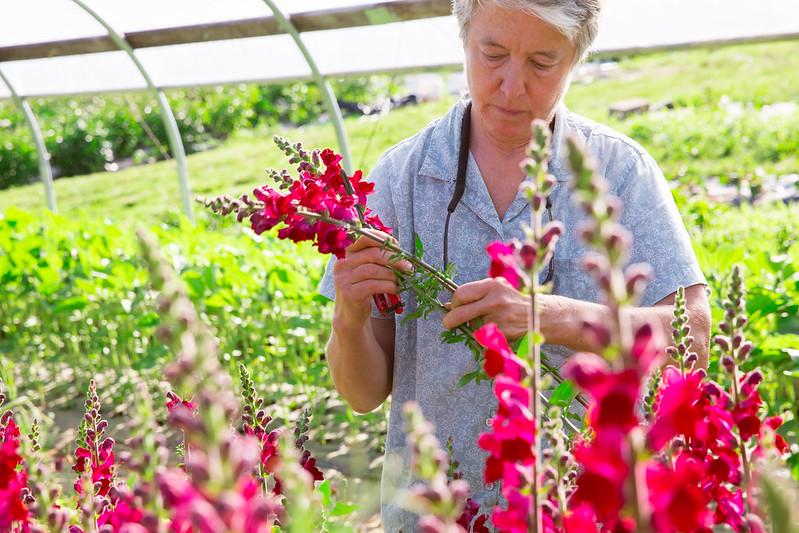 Greenstone Fields - Barbara Lamborne