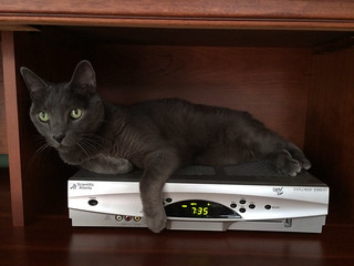 Pacey loves to lounge on the hot DVR