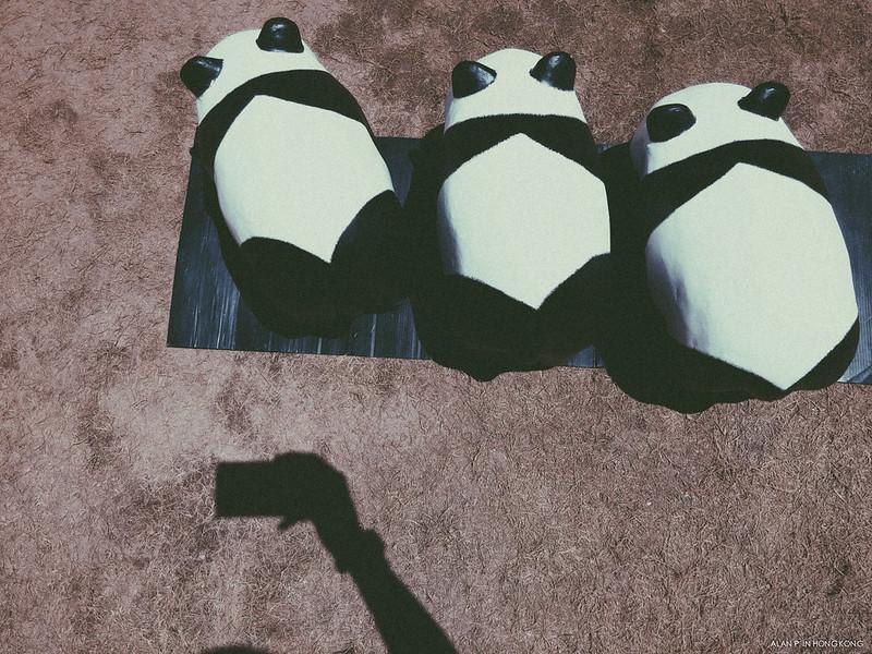 Lined up Panda