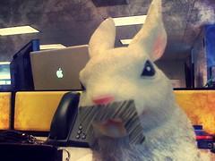 bunny stole fusco's mustache.