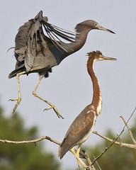 Leap bird