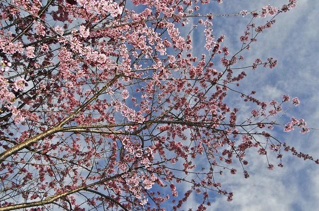 Fervilhando em rosa - série com 5 fotos -