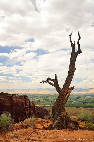 southwest detail tree nature look landscape dead colorado desert symbol icon canyon desolate nationalmonument desolation grandjunctioncoloradounitedstatesamerican
