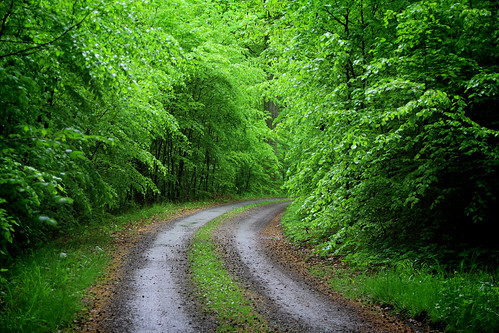 green skåne forrest beechforrest