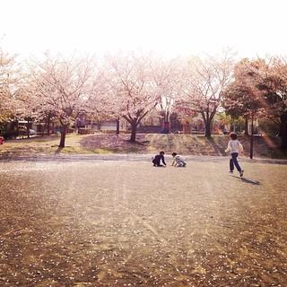 hanasaka park3