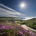 Zig Zag Composition - Headon Warren, Isle of Wight. by s0ulsurfing