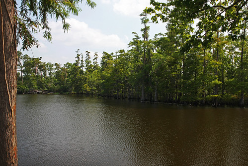 water scenic bayou swamp orangetexas sabineriver