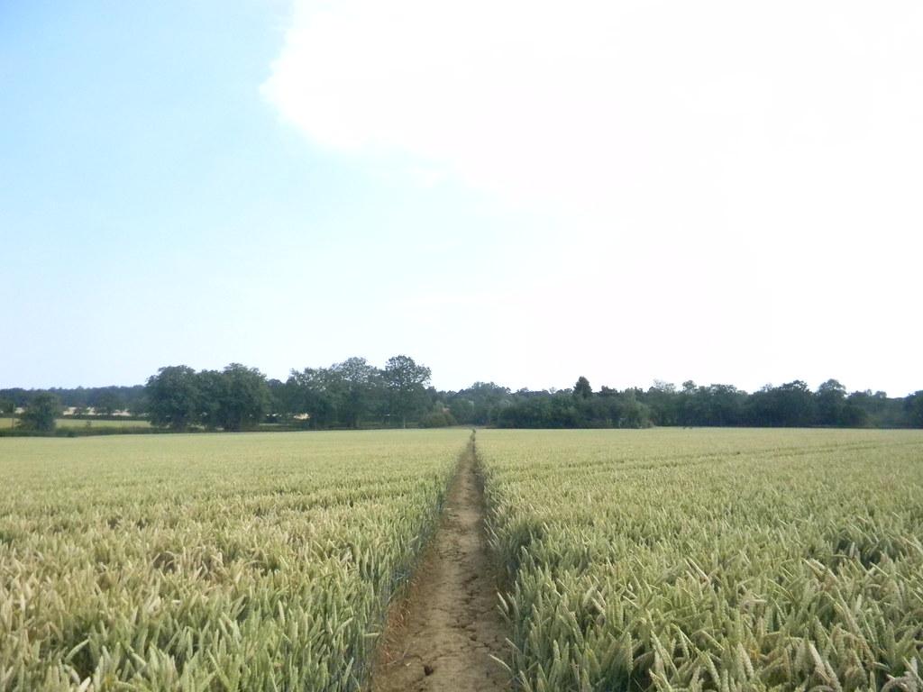 Through wheat Pluckley circular