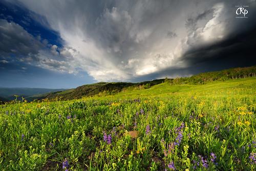 flowers yellow clouds sunrise utah nikon gorgeous nikkor day184 day185 day186 nebo haboob 1424 d700