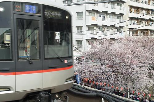 Megurogawa Sakura 01