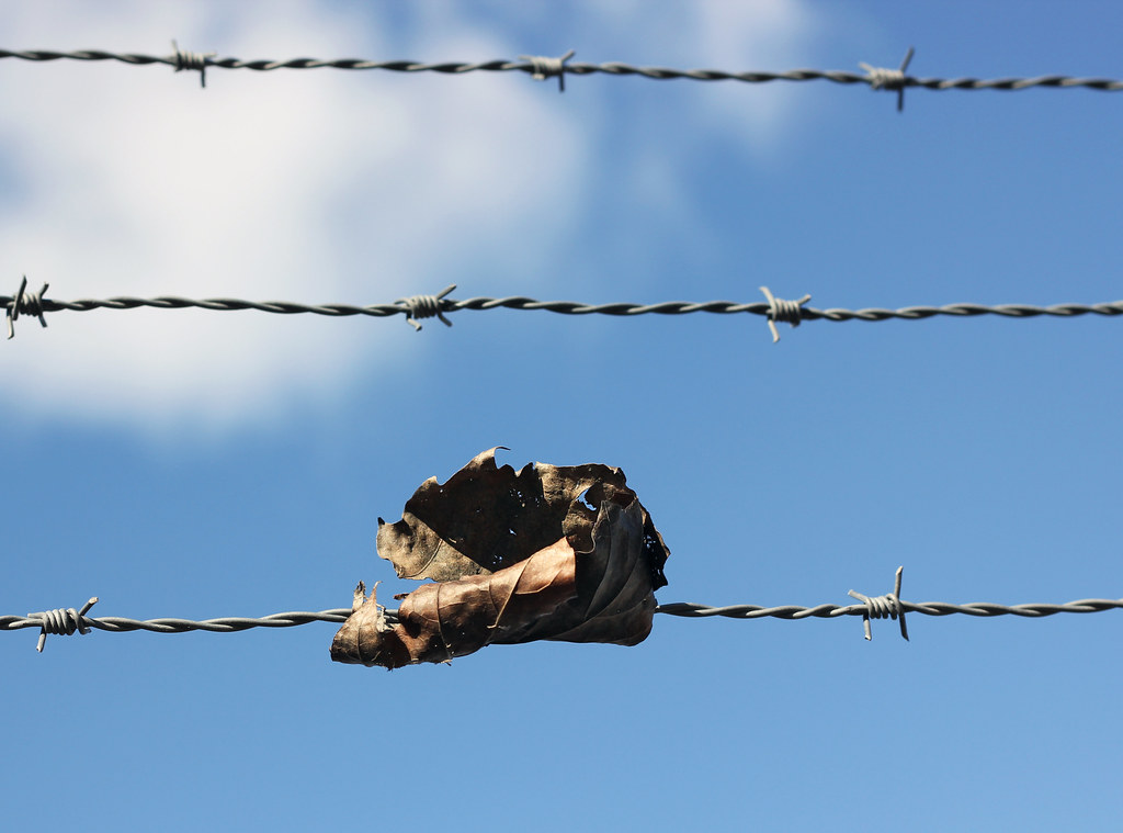 Barbed Wire Autumn Leaf