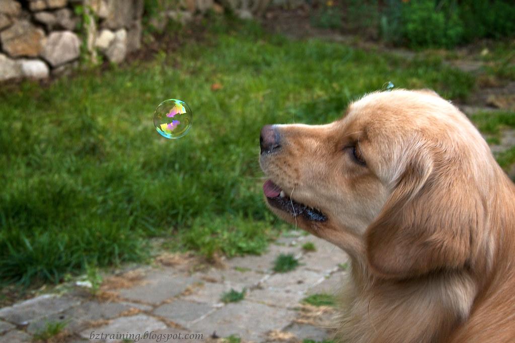 Bubbles Bubbles...