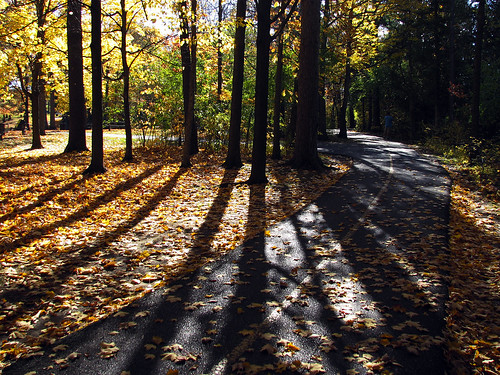 autumn fall bikepath ottawa nationalcapitalcommission vincentmasseypark