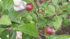20140603 Garden Update_30