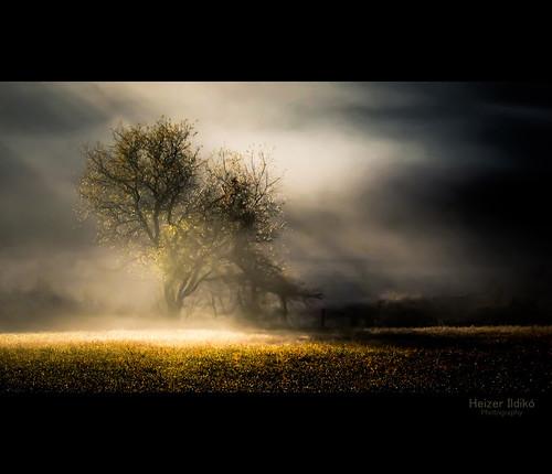 hungary természet fa táj fény köd tájkép ősz erdő árnyék naturepoetry saariysqualitypictures canonsx10 mygearandme ringexcellence