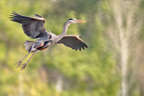 Incoming GBH by Jeff Dyck