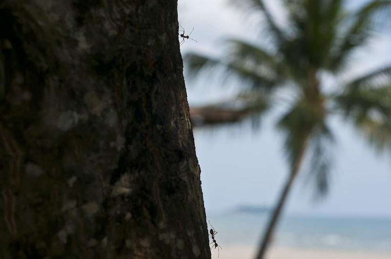 Муравьи на дереве
