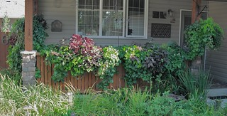 2010 window boxes