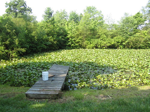 Pond of Pond Pads