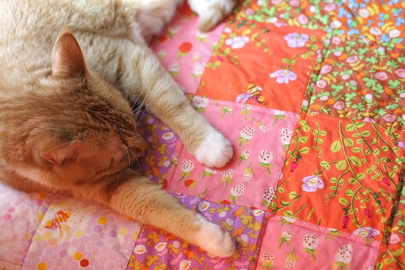 quilt and cat