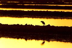 20140512_rice sunset 0558_online copy