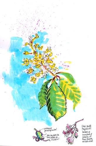 April 2014: Chestnut Trees
