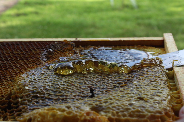 1. Slice off the honeycomb