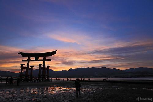 the torii gate