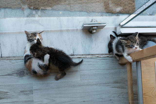 Istanbul - cats at No Name Gallery