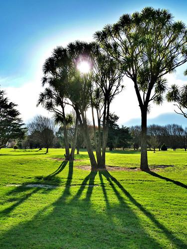 park city trees newzealand christchurch sun green sol grass shadows canterbury nz southisland cbd hdr hagley