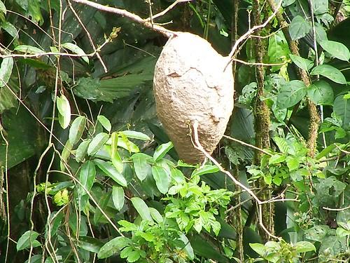 termite nest in jungle