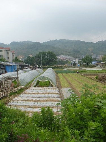 Fujian-Xiapu-Champs (14)
