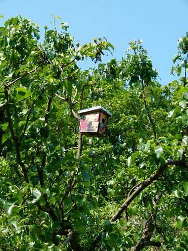 House on the tree