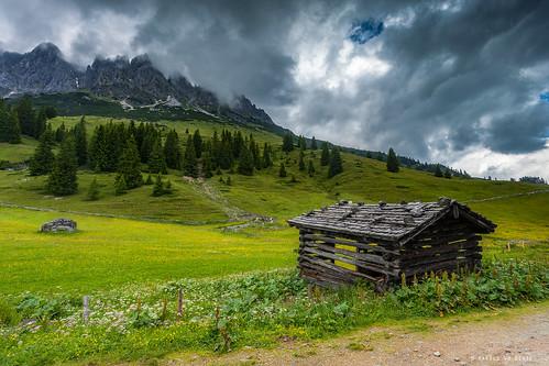 flowers sky alps tree clouds austria oostenrijk österreich bomen meadow wiese wolken alpen lucht alpinemeadows weiden salzburgerland cabbin leefilter hochkonig muhlbach haroldvandenberge haroldvdbnl