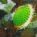 2003_0222_31_Wrigley_Cactus