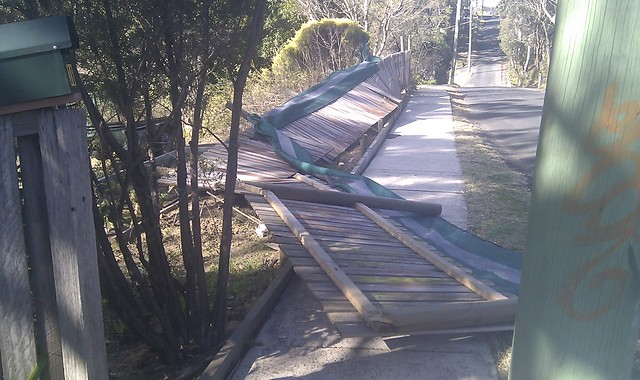 Fence casualty, Wentworth Falls