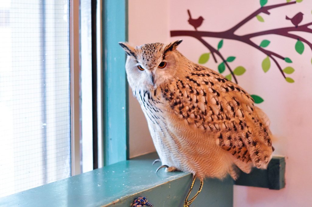 Owl Café