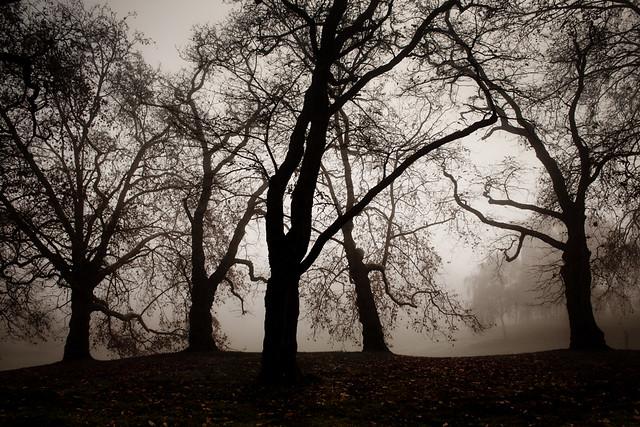 3596 Five Trees
