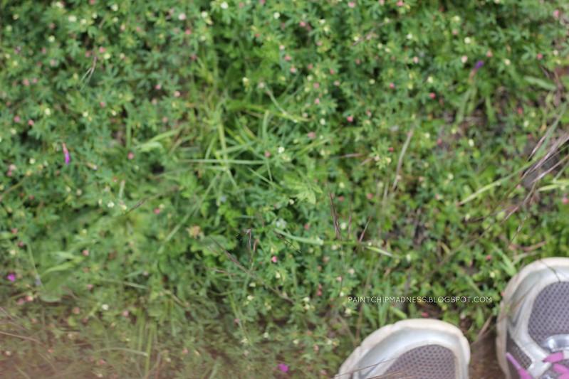 littleflowers
