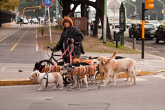 street dog(0.0), conformation show(0.0), animal(1.0), dog(1.0), vehicle(1.0), road(1.0), pet(1.0), mammal(1.0), dog walking(1.0), street(1.0), infrastructure(1.0),