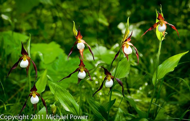 Power-2011-07-02-004.jpg