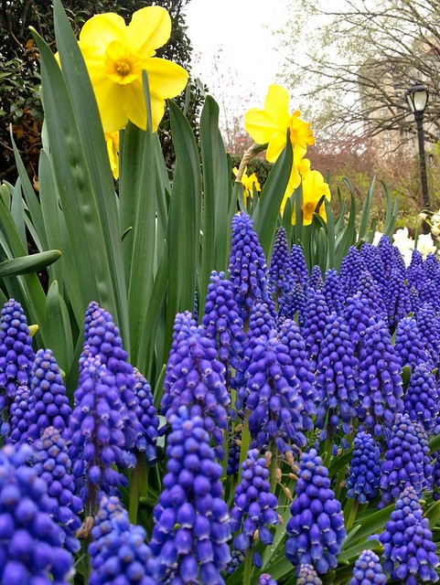 Flowers in Central Park